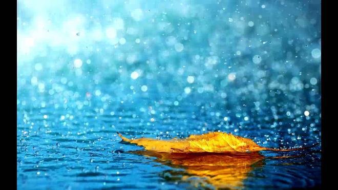 Rain Net Worth